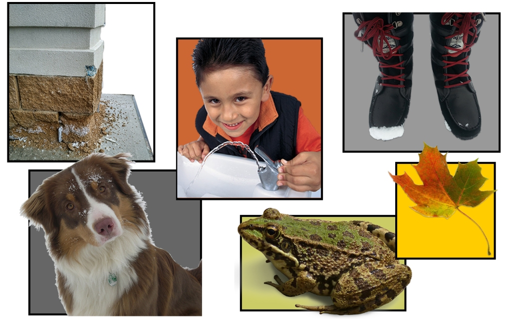 images of a building, child drinking water, winter boots, dog, frog and leaf. All can be damaged by salt.