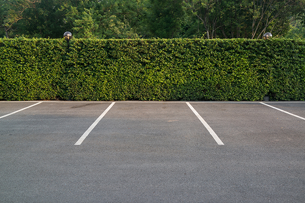 hedge behind parking lot